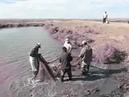 Aral balyghy