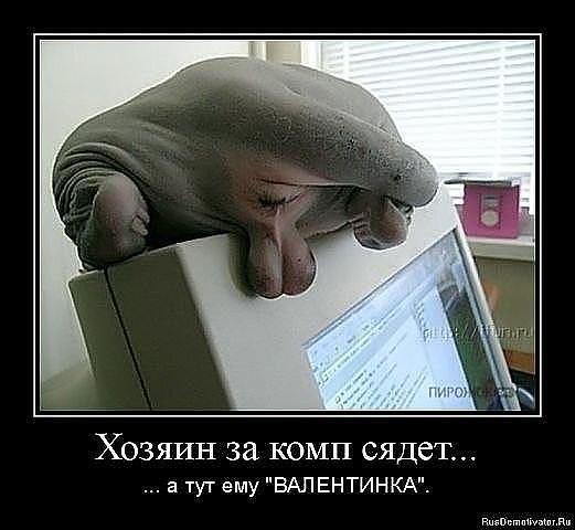 фото кошек сфинксов смешные