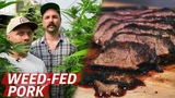 What Does Pork From Weed-Fed Pigs Taste Like Prime Time