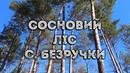 Сосновий ліс, с. Безручки