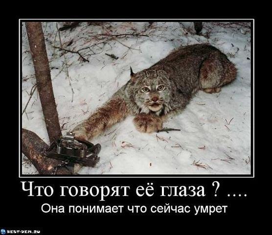 звери кошки