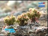 Надписи из камней наносят большой вред уникальной экосистеме Байкала