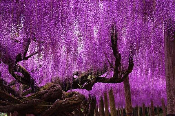 16 самых великолепных деревьев в этом мире: ↪ Посажу такое на даче. Пусть все офигеют.