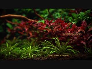nano aquariumaquascapewith lots of plants