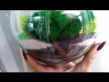 флорариум для нежной леди в шаровидной форме d15 см