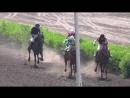 01.07.2018г. Приз ЭЛИТЫ для лошадей 4-х лет и старше буд. породы и высококровной группы. Дистанция 2400 метров.
