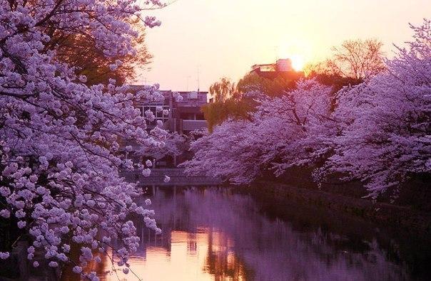 Напейся, и ты будешь счастлив несколько часов; влюбись, и ты будешь счастлив несколько лет; посади сад, и ты будешь счастлив всю жизнь.  © Китайская мудрость