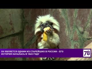 Ленинградскому зоопарку 153 года