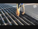 Good Samaritan Rescues Baby Kangaroo _ Good On Ya Mate