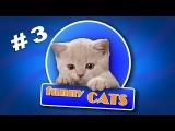 СМЕШНЫЕ КОШКИ котенок и игуана кто кого ВИДЕО ПРИКОЛЫ