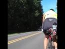 ШВ | Олень на дороге