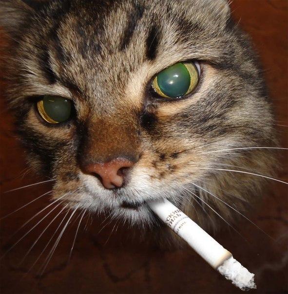 Февраля танкисту, открытки котов с сигаретой