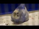 Рождение волнистого попугая Sony Alpha NEX F3 Sony 50mm f 1 8 OSS SEL 50F18