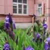 Дом-музей В.В.Вересаева