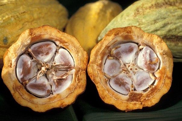 купить настоящий какао из Испании