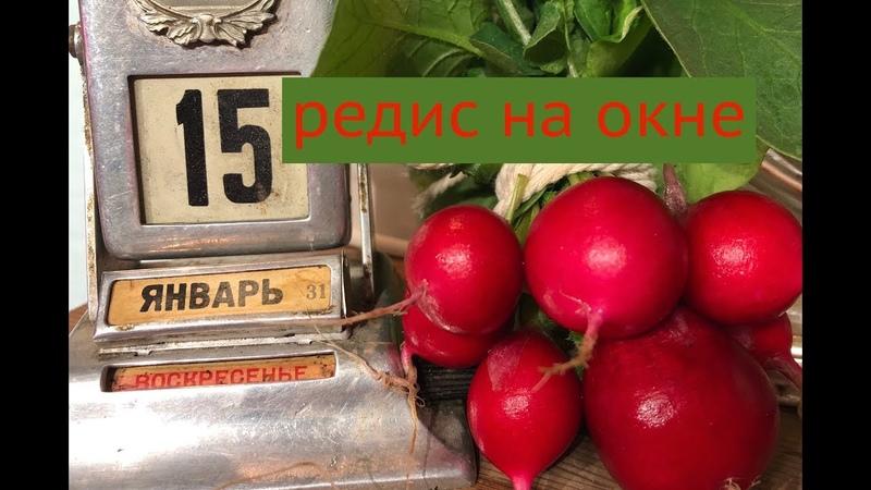 Дачные сезоны с Мариной Рыкалиной 15.01.19. Герань формировка. Редис на окне. Огурцы подкормка.