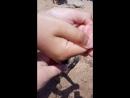Краб отшельник