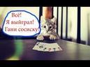 Приколы с котами и смешная ОЗВУЧКА – Попробуй не засмеяться - PSO