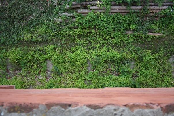 Под стеной растут дикие выносливые растения. Как и любого другого кремля.