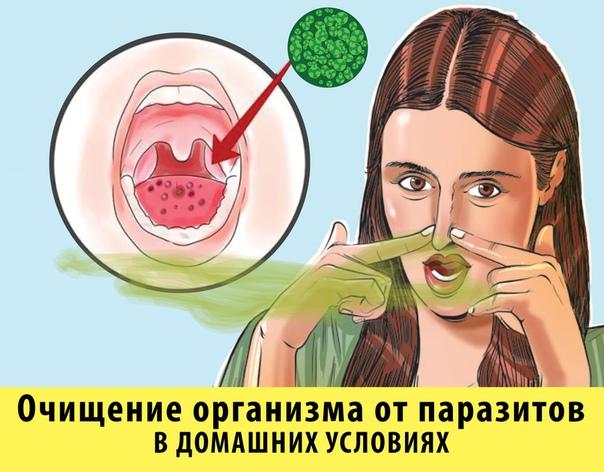 Существует простое средство которое избавит вас от паразитов, вызванного ими запаха изо рта, а так же остановит их появление.Самый обычный препарат, убирает наотмашь всю гадость из организма всего за 1 курс применения!