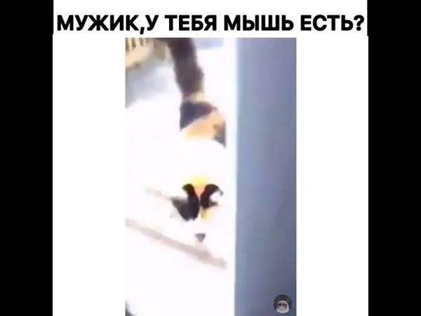 Мужик у тебя мышь есть