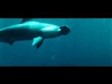 Акула XD