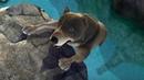Маугли -Книга Джунглей - Все серии сразу - сборник серий 41 - 45 –развивающий мультфильм для детей