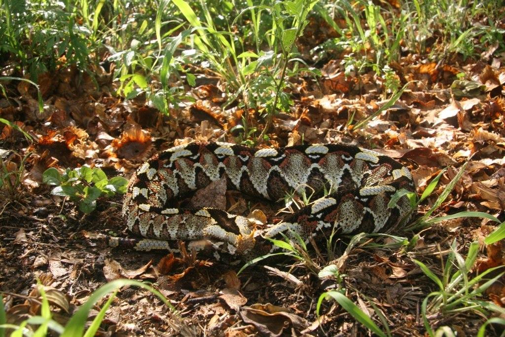 Змеи (