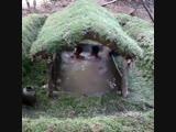 Строительство маленького бассейна с навессом - Моя дача
