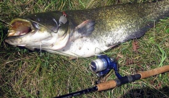 В рыбалке главное терпение и рано или поздно вам повезет