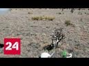 Американский пенсионер совершил самоубийство по сценарию сериала Россия 24