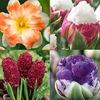 Остров цветов- Многолетние и луковичные растения