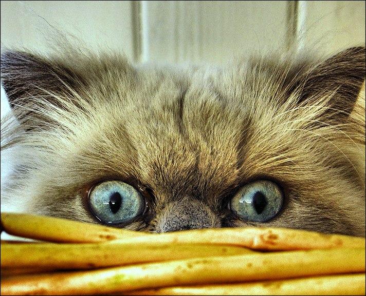 Понедельник день тяжелый картинки смешные с кошками, для