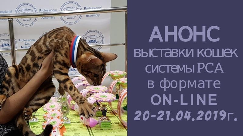 Анонс выставки кошек PCA on line 20 21 апреля 2019г