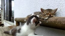 Kitten tries to wake his friend. [VIDEO].mp4