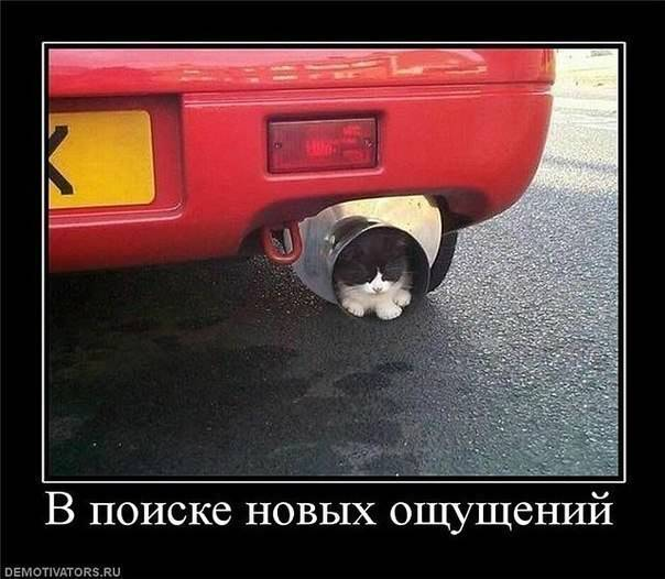 http://cs425727.vk.me/v425727840/75df/wFcNhGqbazA.jpg