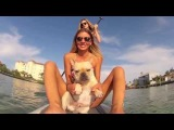 Paddleboarding French bulldog