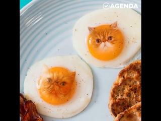 Художница соединяет в фотошопе еду и котиков