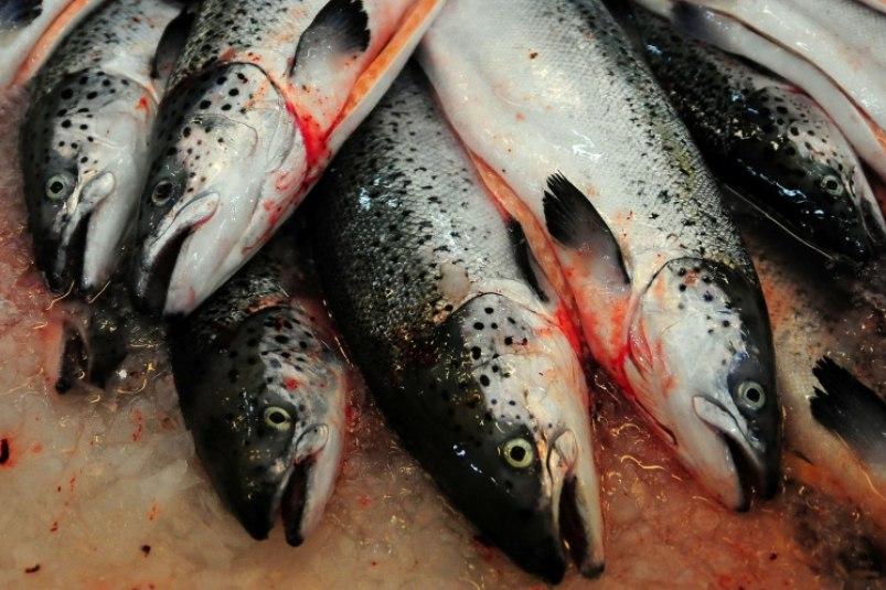 """""""Доступная рыба"""" появится в магазинах Хабаровска в сентябре"""