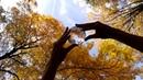 Autumn CGI | Contact Juggling | Denis Kovalev