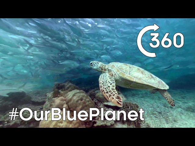 Turtle-y Awesome 360° 🐢 OurBluePlanet - Earth Unplugged