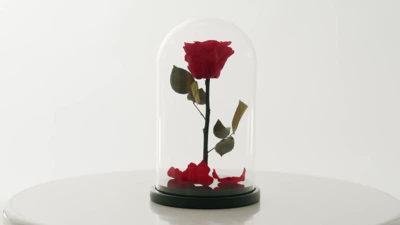 Роза в колбе - Vertige