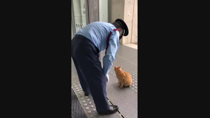 Ты не пройдешь Охранник уже два года не пускает котов в японский музей