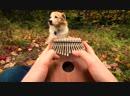 Калимба красивейший музыкальный инструмент