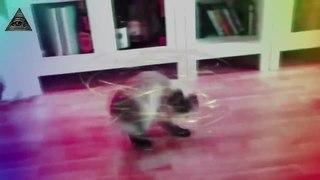 КОТ ТЕЛЕПОРТ TELEPORTING CAT MLG КОТЫ v1 (MLG CATS v1)