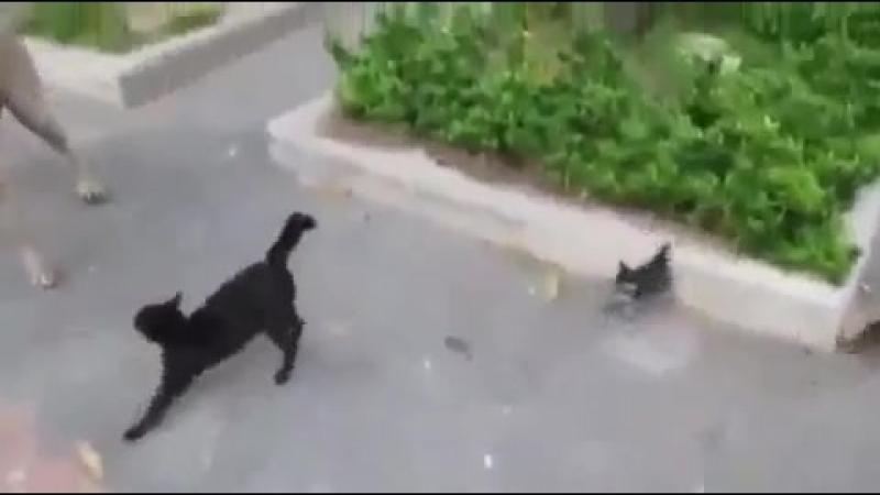 0003мама кошка защищает своих деток
