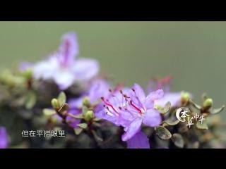 本草中华.Herbal.China.City.2017.EP01.WEB-DL.1080P.X264.AAC.Mandarin.CHS.HQC