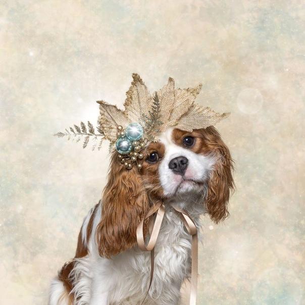 Рождественский фотопроект для фонда бездомных животных Белинда Ричардс (Belinda Richards) из Австралии придумала интересную идею для рождественской фотосъёмки. Она искала как бы передать дух