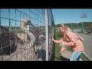 Видео №3/1 - Первый нас встречает страус, главное преодолеть страх