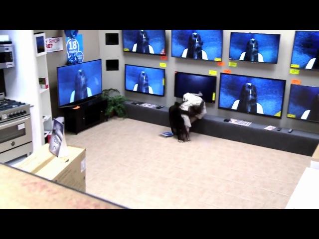 Пранк: девушка из «Звонка» вылезает из реального телевизора